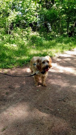 Chesterton, IN: Great place to take your pets in Spring and Summer Walks...