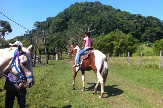 Harvest Caye Horseback Riding and...