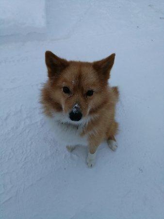Enontekiö, Finlandiya: The adorable and friendly pet dog
