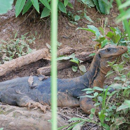Dominical, Costa Rica: photo4.jpg