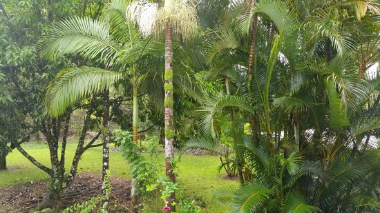 Lava Tree Tropic Inn: Beautiful trees around the house