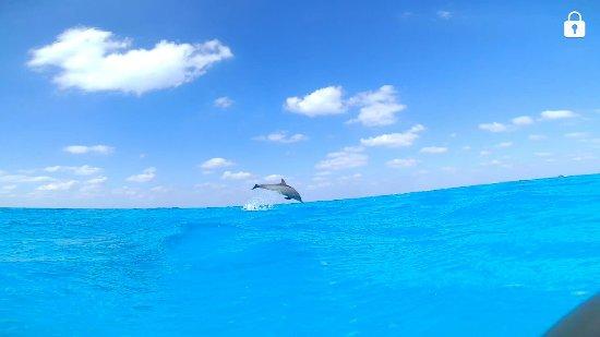 Dolphin House Reef (Sha'ab Samadai) : Screenshot_20171202-190131_large.jpg