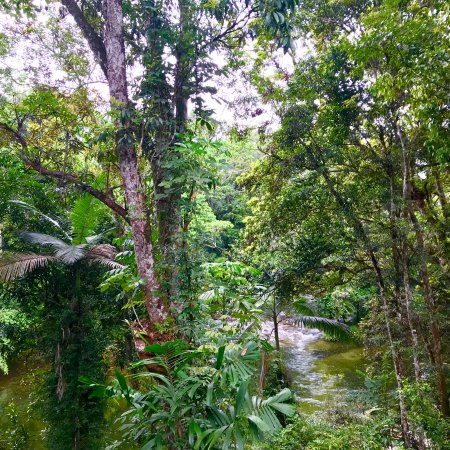 Mossman, Australia: Around the property