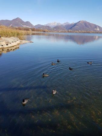 Alserio, إيطاليا: Ducks swimming near the park of Alserio