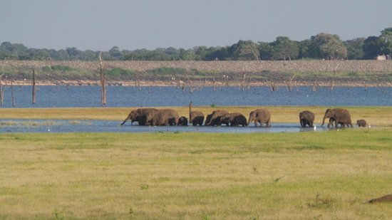 Habarana, Sri Lanka: Elephants!