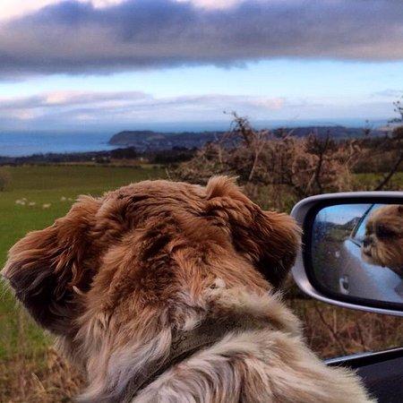 Ballycastle, UK: Oscar our dog enjoying the views
