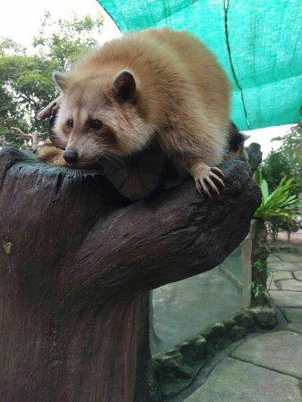 Sri Kembangan, Malezya: mmexport1512388464986_large.jpg