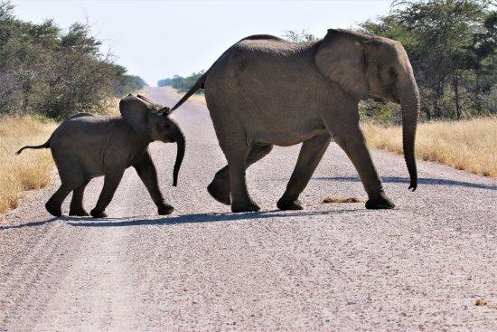 Sense of Africa - Day Tours: Elephants of Etosha Namibia