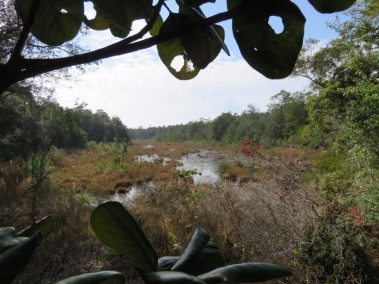 """Niceville, FL: View of the now swampy Puddin Head Lake. Dam was removed to return it to the """"Real Florida""""."""
