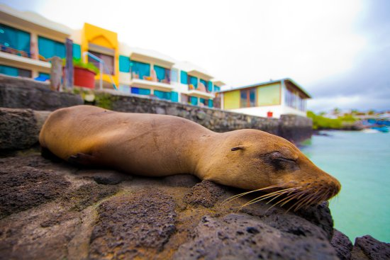 Hotel Solymar: Baby sealion napping on the steps down to our ocean access
