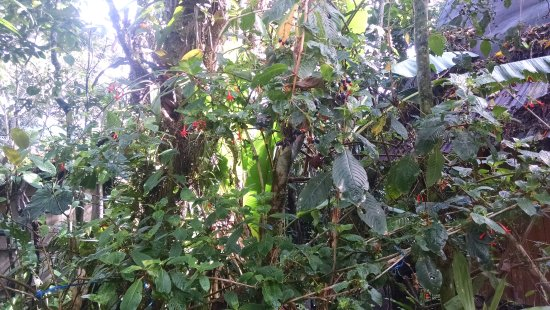 Cabanas Armonia y Jardin de Orquideas Bild