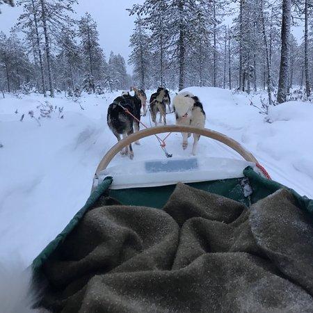 Era-Susi Huskies - Day Tours: photo1.jpg