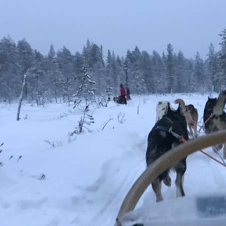 Era-Susi Huskies - Day Tours: photo2.jpg