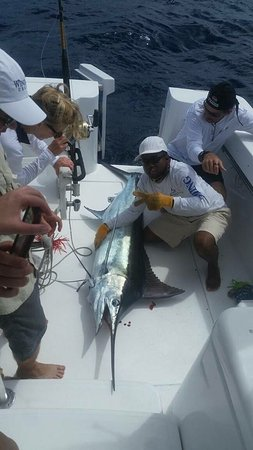 Gros Islet, St. Lucia: Nice Blue Marlin catch and release w Capt Dell and Arnold
