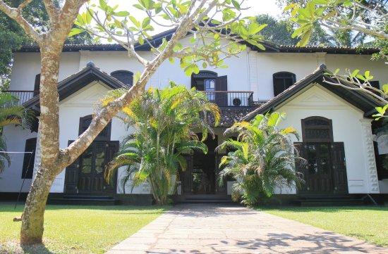 Galle Henna Estate Photo