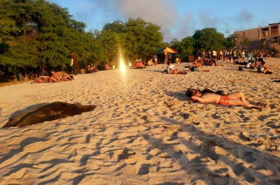 San Cristobal, الإكوادور: Spiaggia, leoni e riflesso