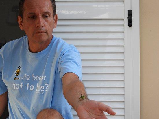 Pastida, Greece: Le api sono creature meravigliose