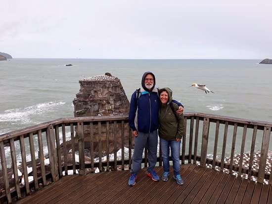 Hunua, New Zealand: Gannet colony