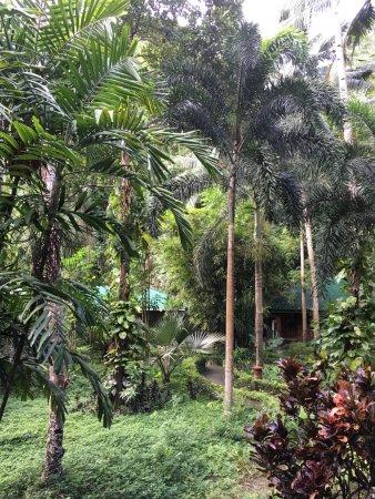 Pulau Lembeh, Indonesië: Garden View