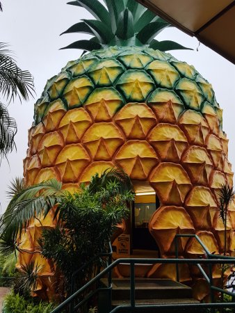 Nambour, Australia: Pineapple entrance