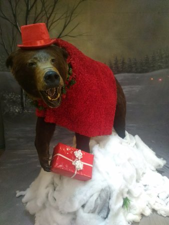 Billings, MT: Have a photo by the bear, great Christmas card!