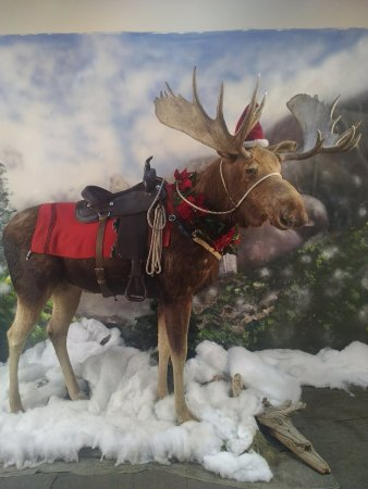 Billings, Μοντάνα: Ride a moose and it'll make a fantastic Christmas card!