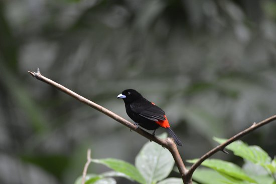 Playa Grande, Costa Rica: Birds