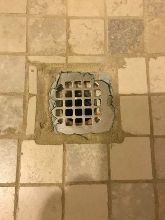 Bridgewater, NJ: Shower drain. Yuck.