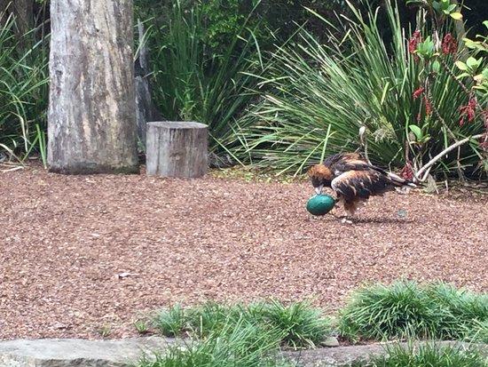 Currumbin, Australie : Bird display