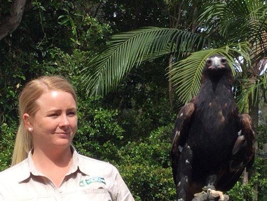 Currumbin, Australie : Eagle
