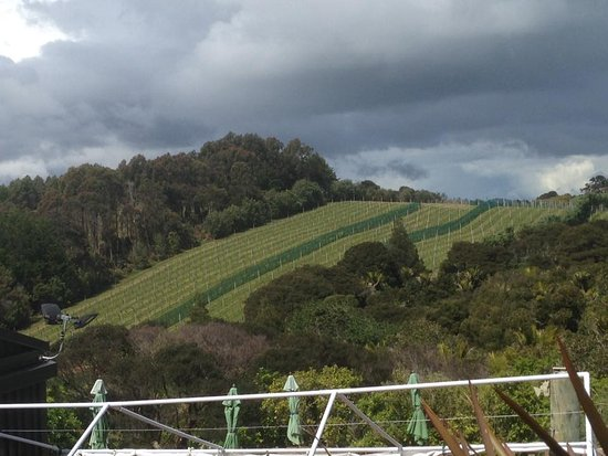 Isola Waiheke, Nuova Zelanda: Views