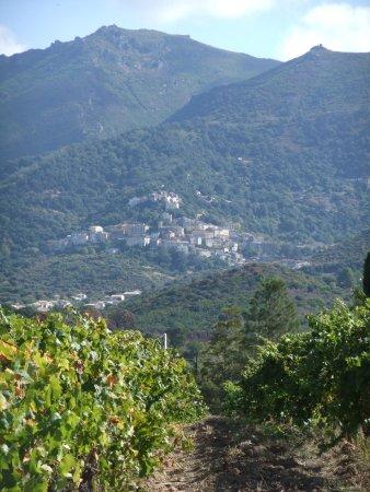 Domaine Santamaria: Santamaria Vineyards
