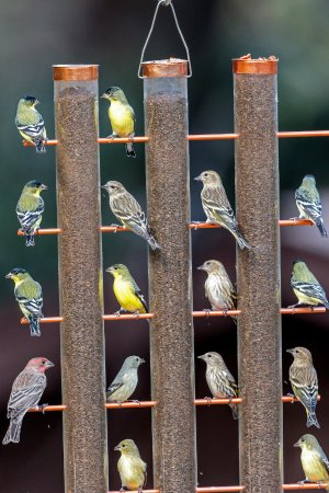 Madera Canyon, AZ: A couple dozen different bird feeders.