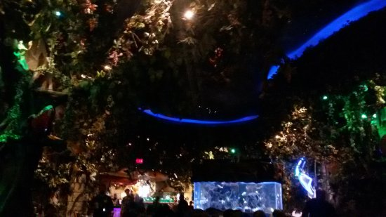 Rainforest Cafe 사진