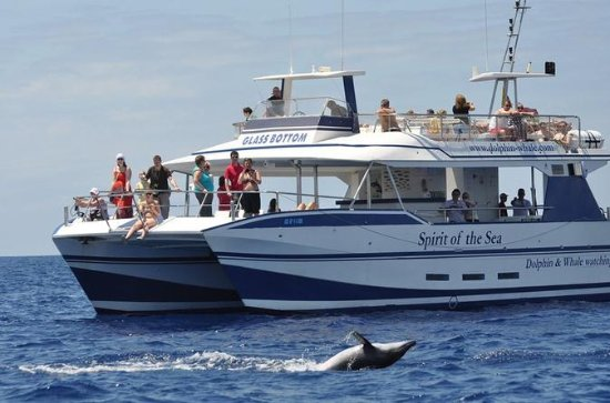 Gran Canaria Whale and Dolphin...