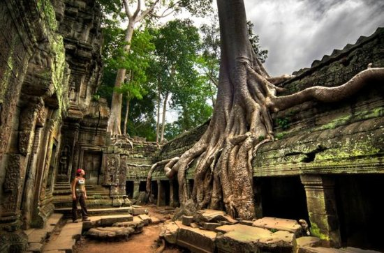 Ta Prohm and Banteay Srei Temples...