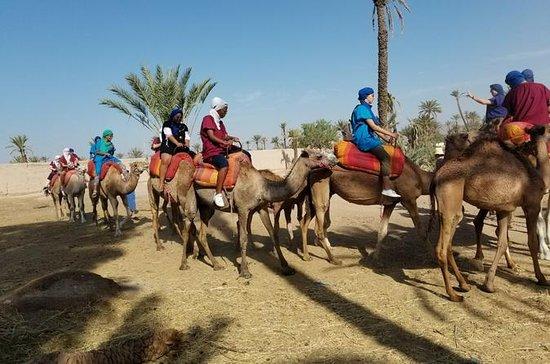 Camel Ride og Luxury Spa Treatment i...