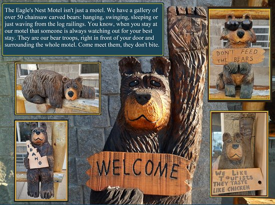 Priest River, ID: bear gallery