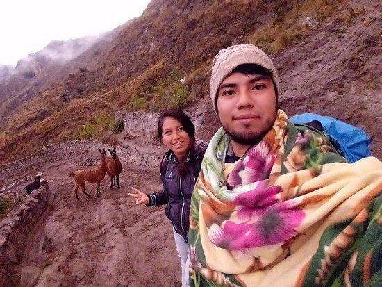 Quilotoa, Ecuador: Lamas walking on our way