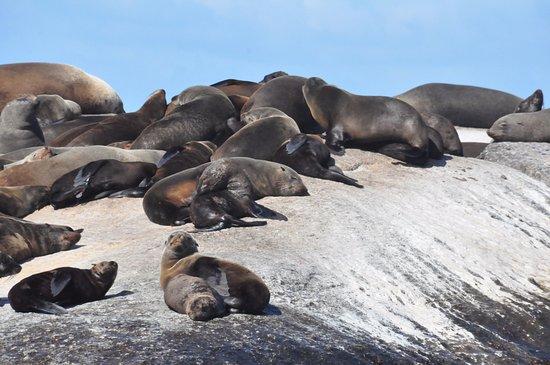 Hout Bay, Sør-Afrika: Descansando