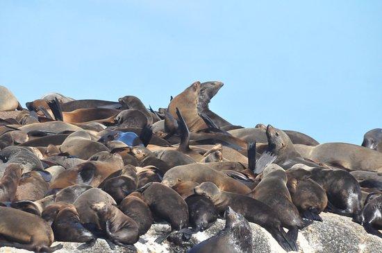 Κόλπος Hout, Νότια Αφρική: El manda mas