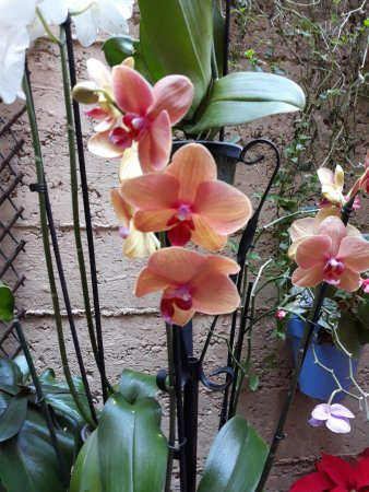 Los Patios De San Basilio: Orquideas en un patio
