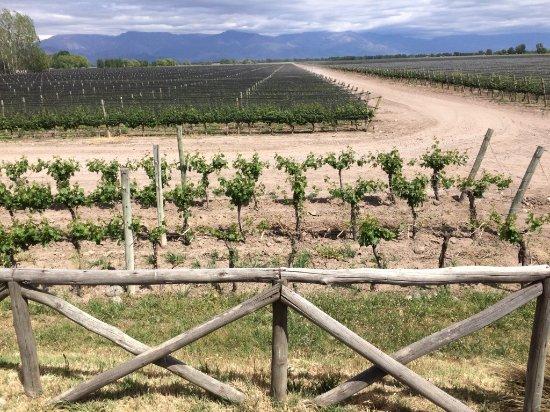 Eugenio Bustos, الأرجنتين: Wanderung durch das Weingut