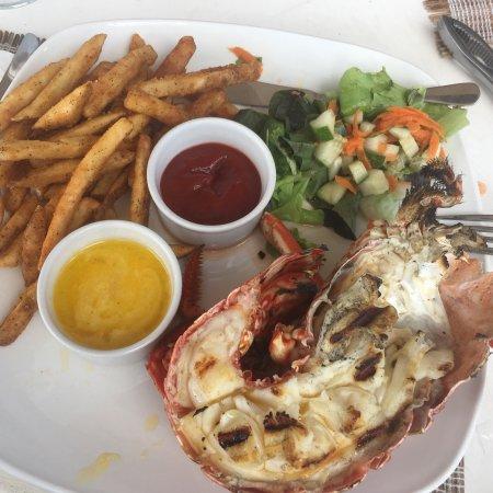 Lobster Alive: photo0.jpg