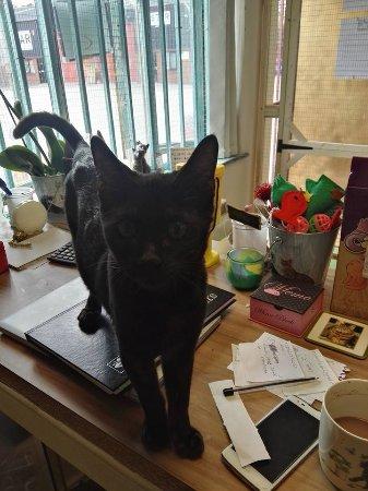 Needham Market, UK: Hades, Black Panther Bengal