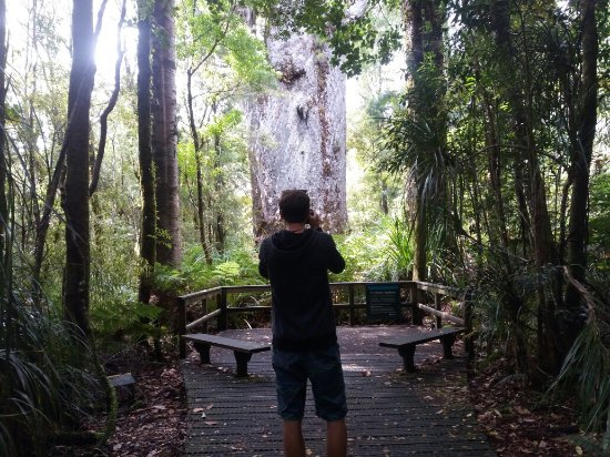 Waipoua Forest, Nova Zelândia: 20171202_105309_large.jpg