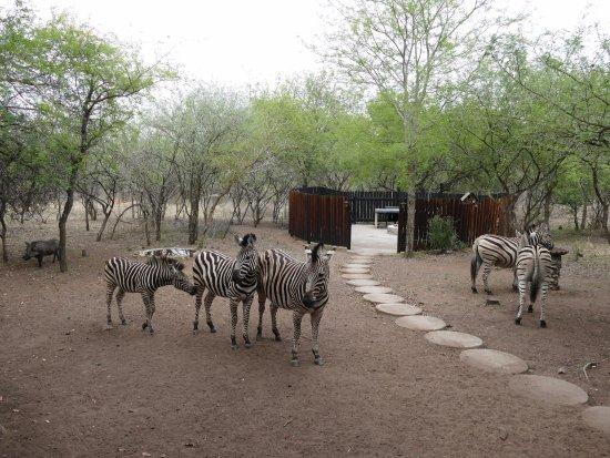 Marloth Park, South Africa: Tiere kommen sehr nah