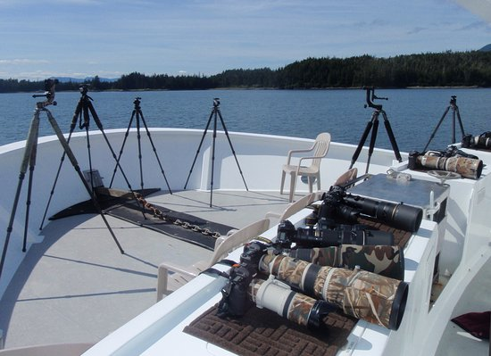 Petersburg, Alaska: Alaska Sea Adventures is Alaska's premier yacht based wildlife photography  offerings.
