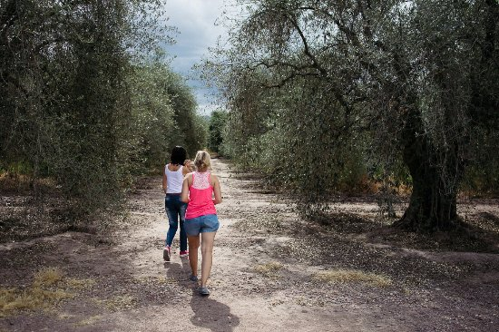 Olivicola Maguay: Guided visit to the olive trees