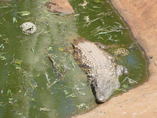 Zululand Safari Lodge: Krokodiele vom Esstisch aus beobachten